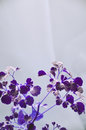 Abstract Purple Plants on Gray Background Royalty Free Stock Photo