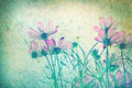 Abstract retro background from Cosmos flowers filtered by grunge texture Royalty Free Stock Photo