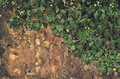 Abstract rock and green plant ivy