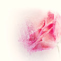 Abstract rose in creamy ice Stock Photo