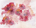 Abstract roses watercolor painting background Stock Photography