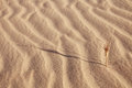 Abstract sand background with sunlight and grass in desert Stock Photos
