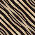 Abstract seamless background or texture of zebra stripes. Royalty Free Stock Photo