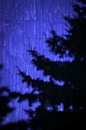 Abstract shade tree background on a blue metal wall cladding Royalty Free Stock Photography
