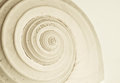 Abstract snail spiral a closup of a seashell s spirel Royalty Free Stock Photography