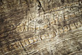 Abstract snake pattern on wood Royalty Free Stock Photo