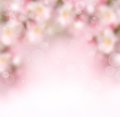 Abstract spring background with flowers and bokeh Royalty Free Stock Photo