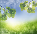 Abstract spring background with grass defocus Stock Photo