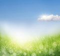 Abstract spring background with grass defocus Stock Image