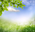 Abstract spring background with grass defocus Royalty Free Stock Photos