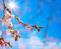 Abstract spring background with pink blossom border Stock Photo