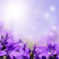 Abstract spring background with purple flowers sunshine and bokeh Stock Photo