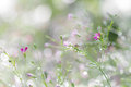 Abstract spring flower blurred background of Gypsophila tiny purple flowers bloom with morning dewdrops and bokeh in sweet soft g Royalty Free Stock Photo
