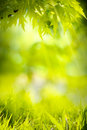 Abstract Spring Nature Green B...