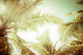 Abstract summer background with tropical palm tree leaves in vintage style at sunny day Royalty Free Stock Photos