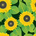 Abstract sunflowers flowers background. Stock Images