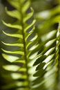 Abstract Sunlit Fern Stock Image