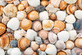 Abstract texture of shells beautiful con the beach Royalty Free Stock Image