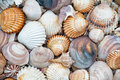 Abstract texture of shells beautiful con the beach Stock Photos