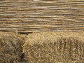 Abstract texture of yellow bamboo and hay background Royalty Free Stock Photo