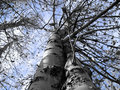 Abstract View of Tree Royalty Free Stock Photo