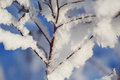 Abstract View of Winter Snow on Tree Branches Royalty Free Stock Photo