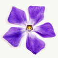 Abstract violet flower beautiful windmill Royalty Free Stock Photos