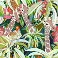Abstract watercolor illustration of three giraffes, background tropical forest