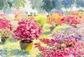 Abstract watercolor landscape original painting pink color of Paper flower
