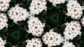 Abstract white flower photo pattern
