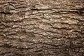 Abstract Wood Texture Bark Royalty Free Stock Photo