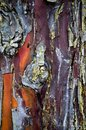 Abstract Wood Texture Bark, Cy...