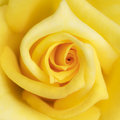 Abstract yellow flower Royalty Free Stock Photo