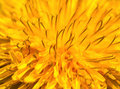 Abstract yellow flower macro Royalty Free Stock Photo