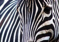Abstract Zebra Stock Images