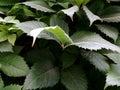 Abundance of greenery Royalty Free Stock Photo