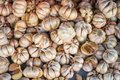 Abundance pile of fresh herbal organic flavouring garlic bulbs with cloves background selling in local market for food ingredient Royalty Free Stock Photo