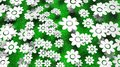 Abundant white flowers on green grass background Stock Photo