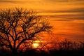Acacia tree at sunset, Botswana Royalty Free Stock Photo