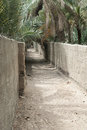 Access roads and tracks in a date palm oasis concrete paths uae Royalty Free Stock Image