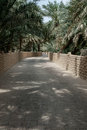 Access roads and tracks in a date palm oasis concrete paths uae Royalty Free Stock Photography