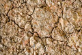 Acid Sulfate Soils Surface