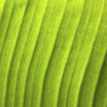 Acklight fresh banana palms green leaf texture background of backlight Stock Photos
