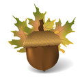 Acorn with autumn leafs. Realistic vector