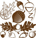 Acorn Collection Stock Photos