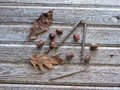 Acorn still life some acorns a few dried leaves and a nutcracker and pick Stock Photos