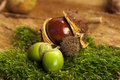 Acorns and chestnut Stock Images
