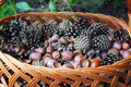 Acorns and cones in the wicker basket Royalty Free Stock Photo