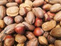 acorns, nuts and almonds