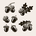 Acorns set. Vector Royalty Free Stock Photo